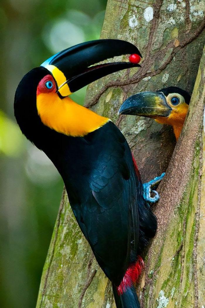 birds_11