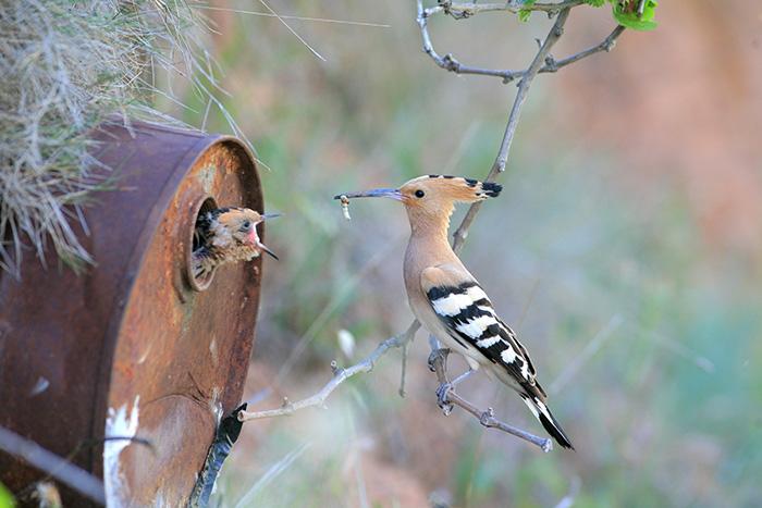 birds_20