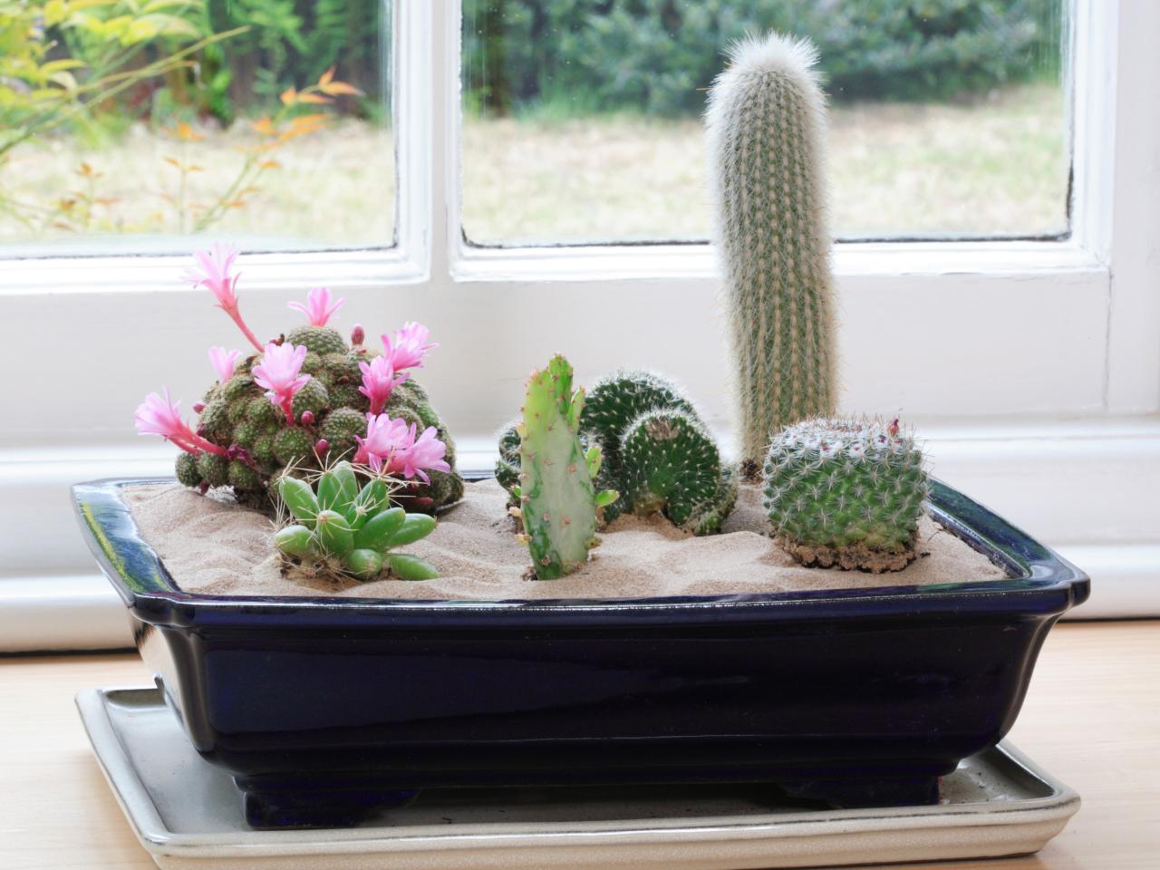 cactus_mix_1