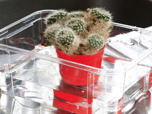 cactus_mix_10