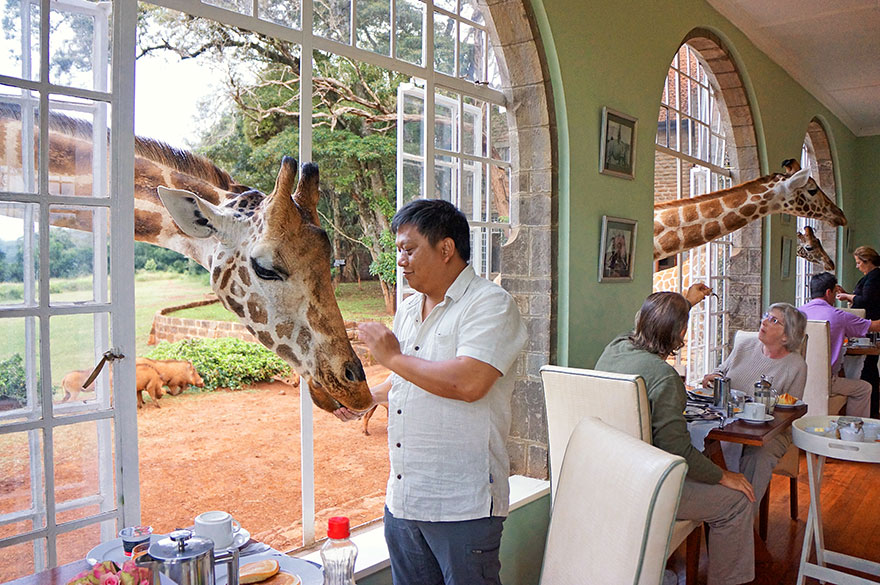 giraffe_manor_kenya_5_2