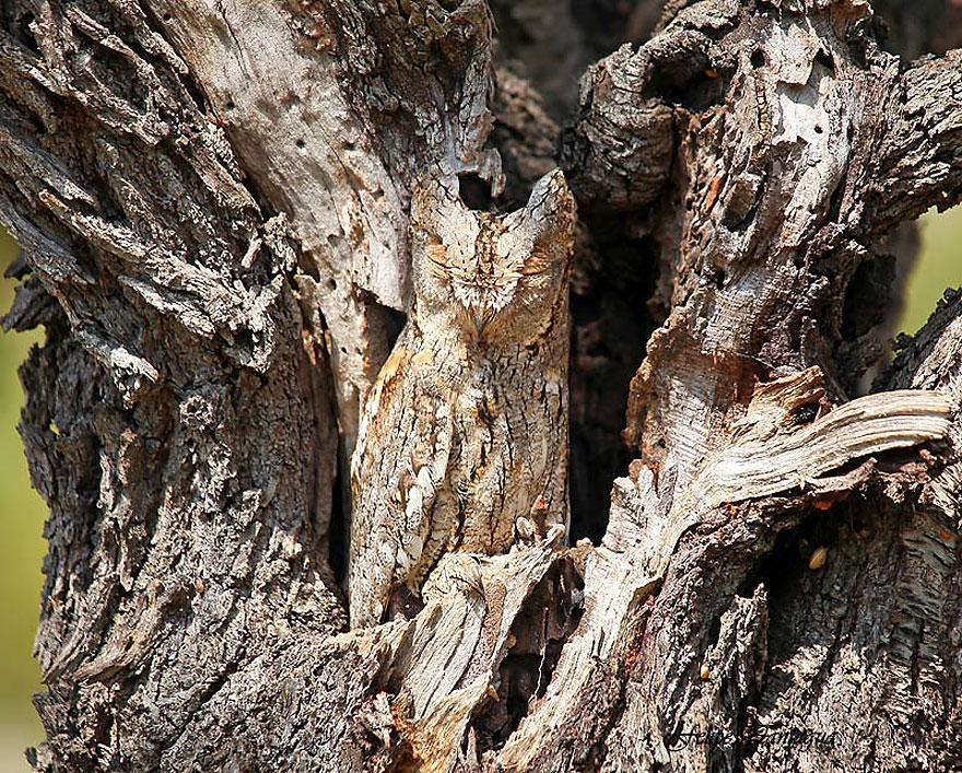 animal_camouflage_1