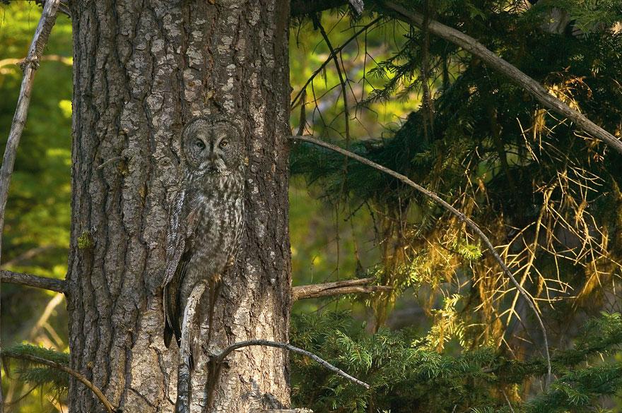animal_camouflage_11