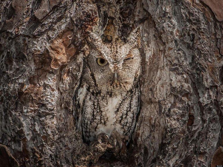 animal_camouflage_19