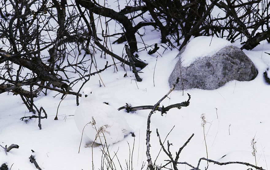 animal_camouflage_3