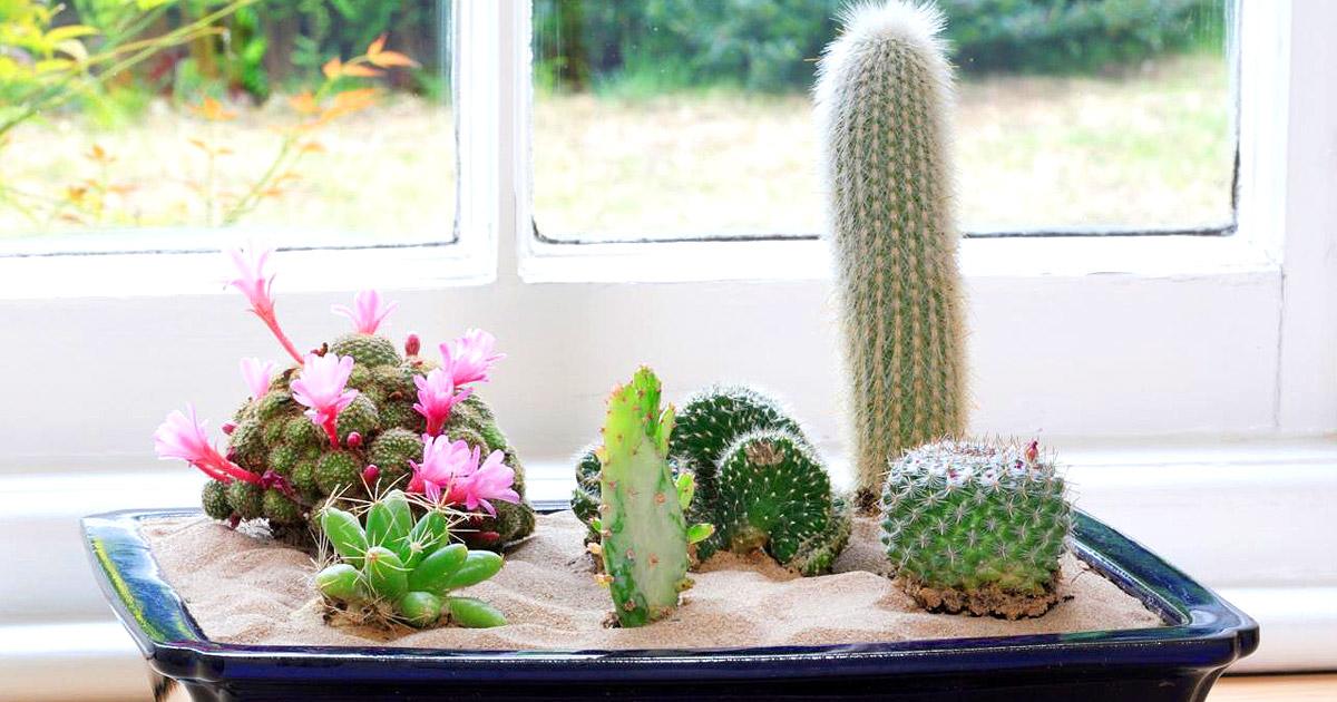 может возникать демотиваторы кактусы на окне зданием имеется бесплатная