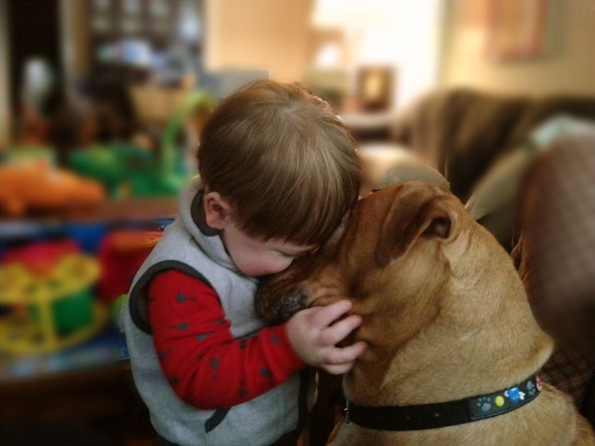 cats_dogs_and_children_1