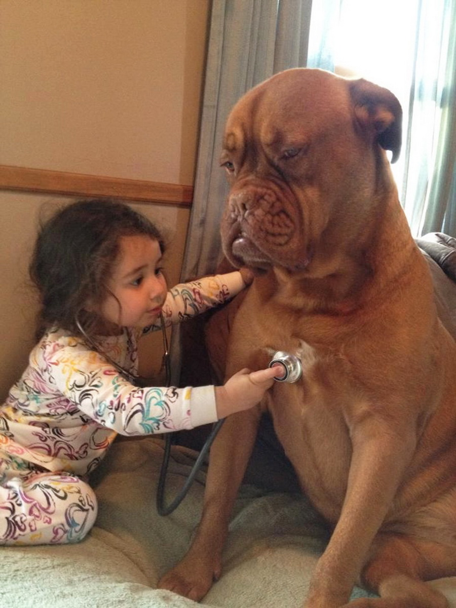 cats_dogs_and_children_13
