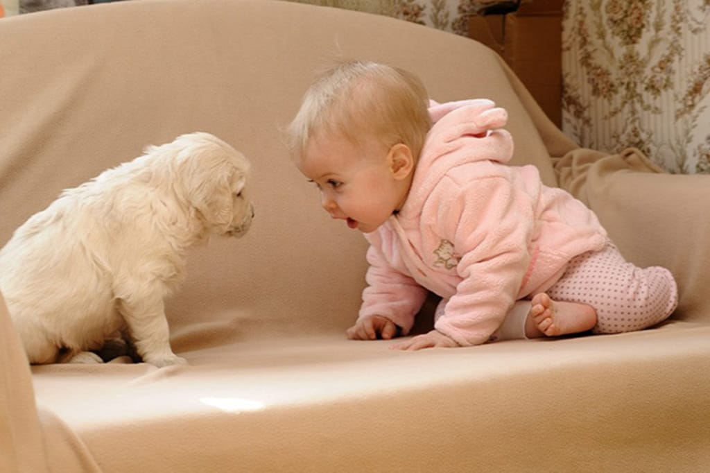 cats_dogs_and_children_15