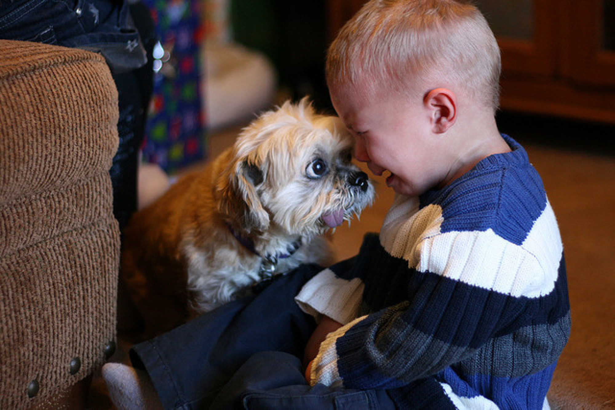 cats_dogs_and_children_16