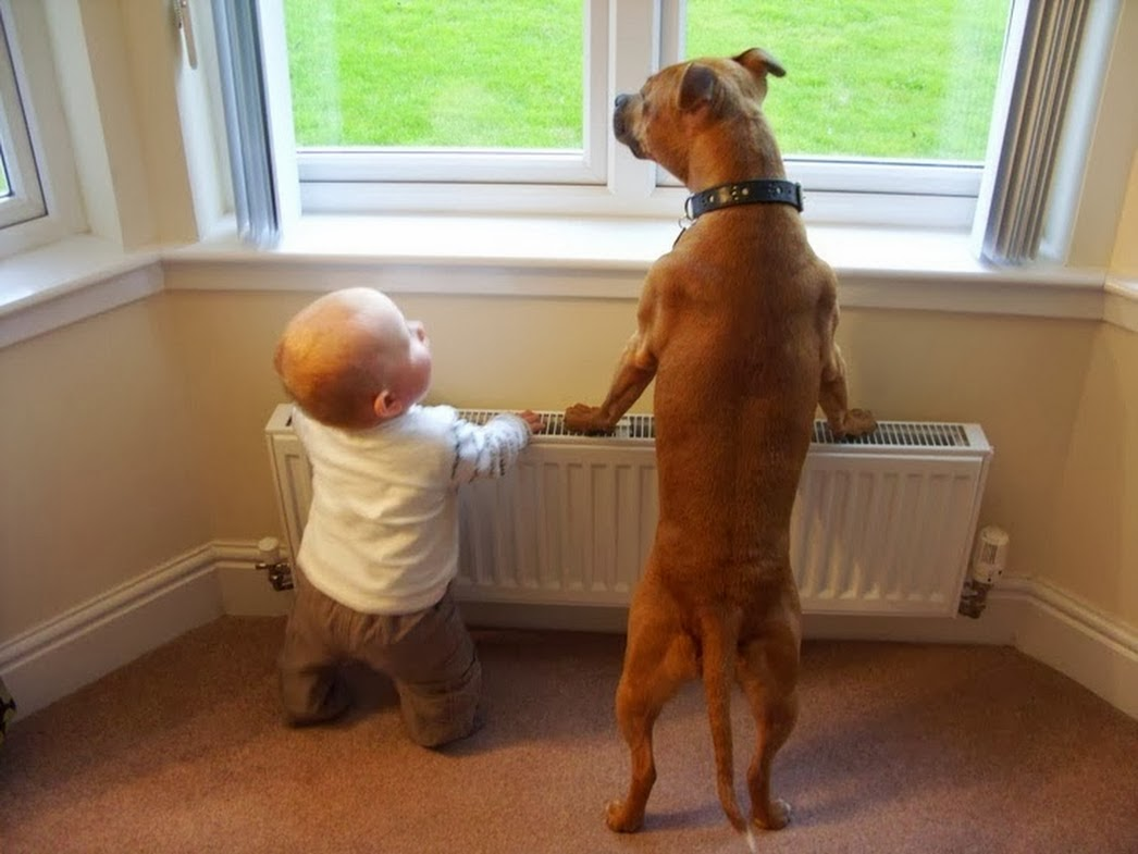cats_dogs_and_children_17