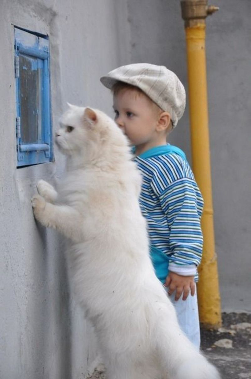 cats_dogs_and_children_18