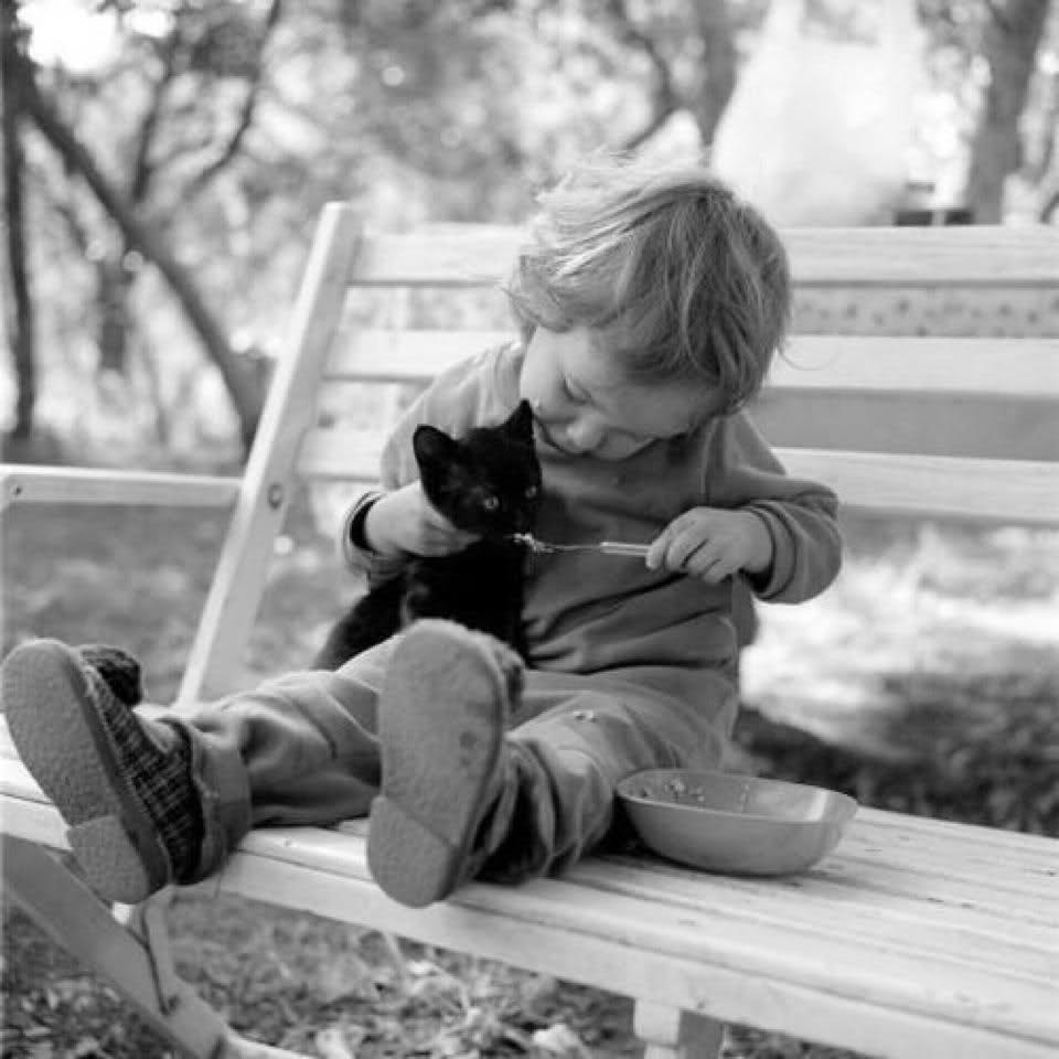 cats_dogs_and_children_19