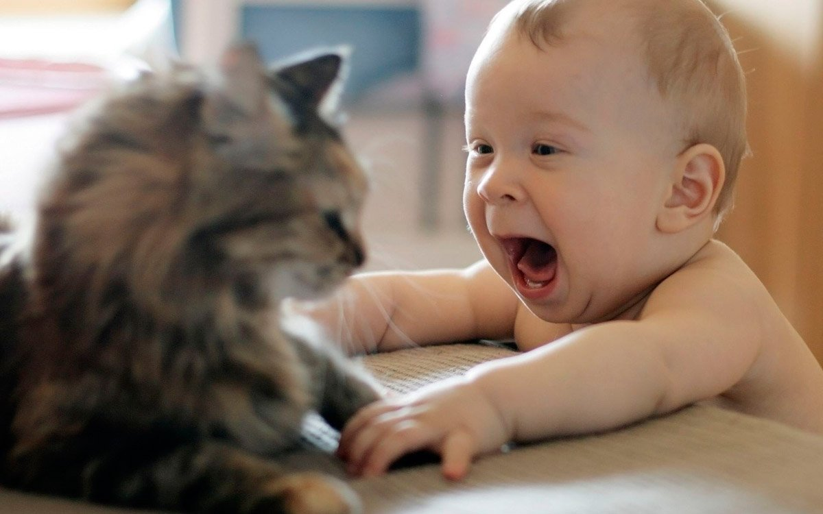 cats_dogs_and_children_2