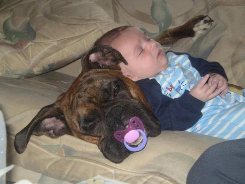 cats_dogs_and_children_21