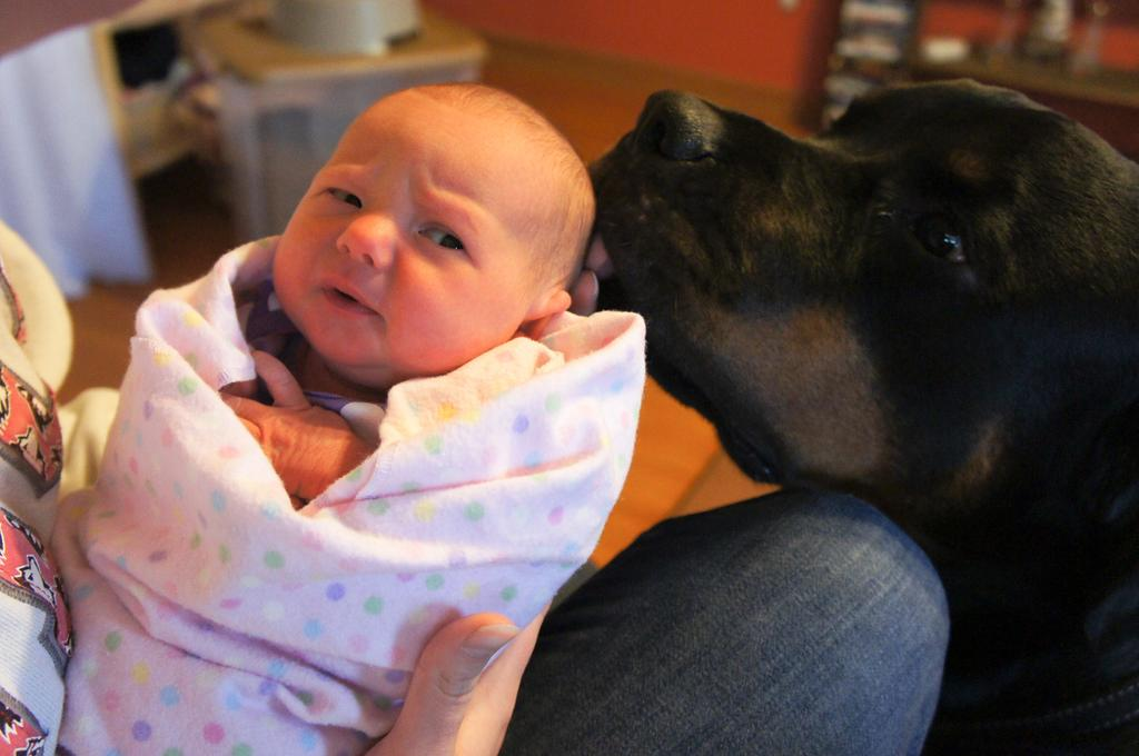 cats_dogs_and_children_22