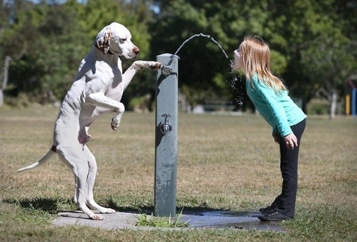 cats_dogs_and_children_25