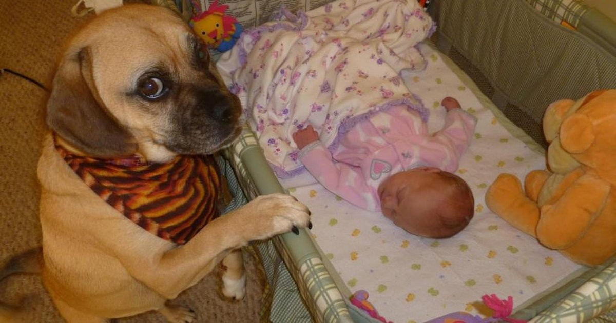cats_dogs_and_children_26