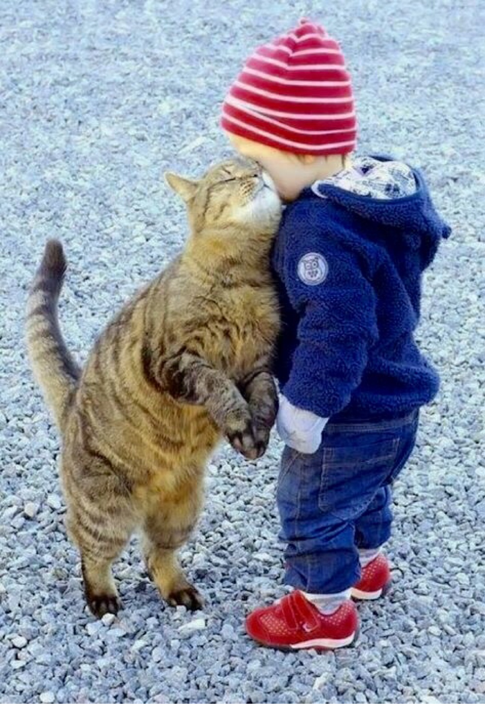 cats_dogs_and_children_27