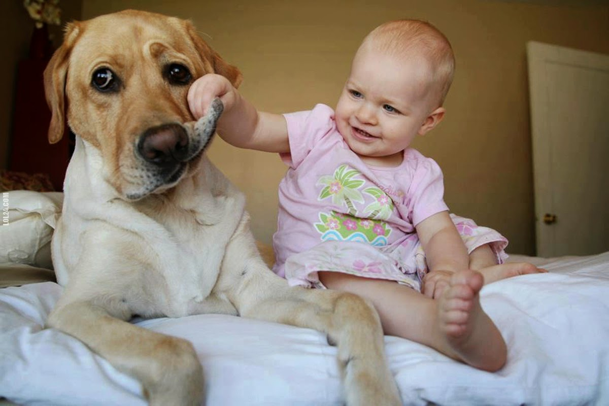cats_dogs_and_children_29