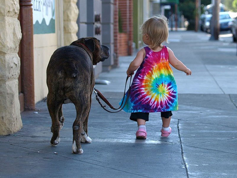 cats_dogs_and_children_3