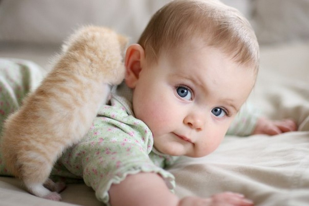 cats_dogs_and_children_31