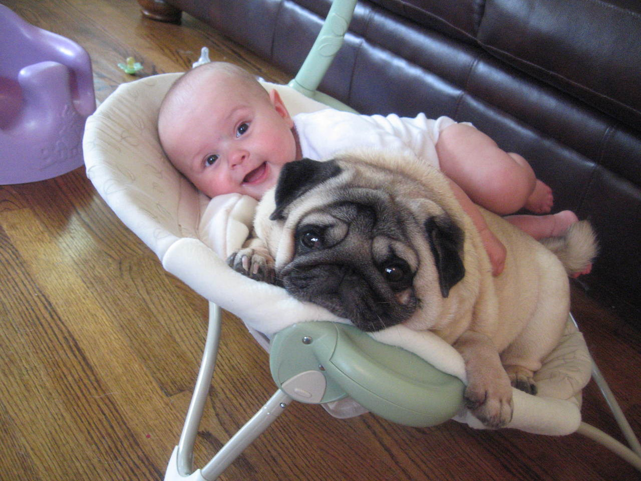 cats_dogs_and_children_32