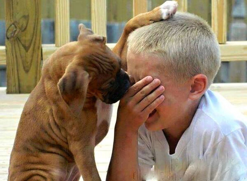 cats_dogs_and_children_33