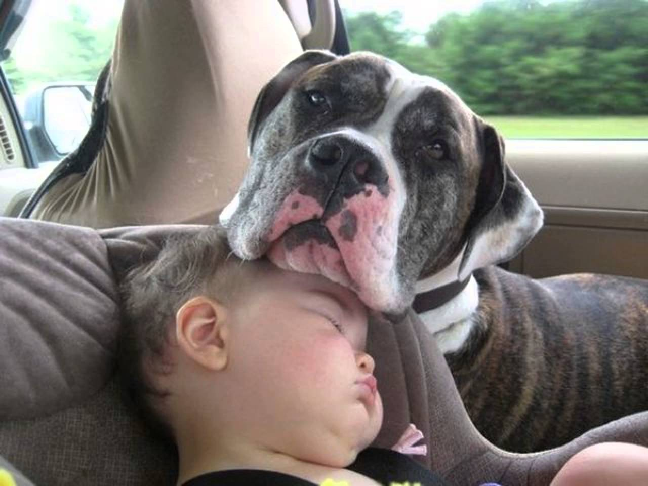 cats_dogs_and_children_34