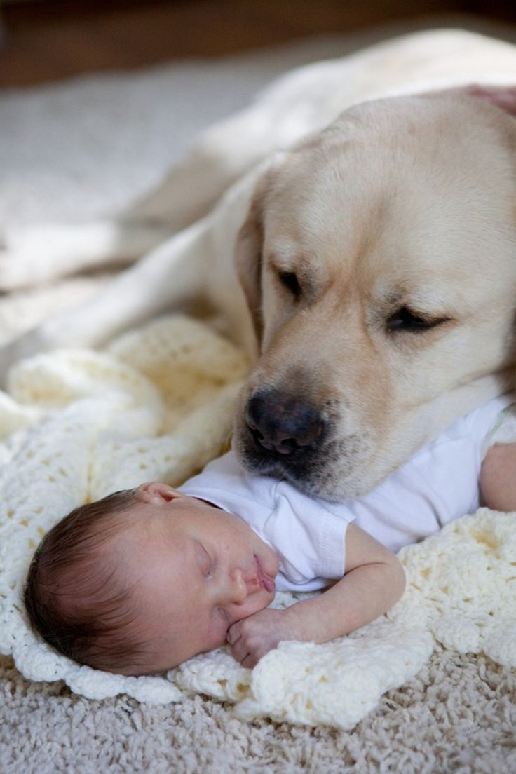 cats_dogs_and_children_35