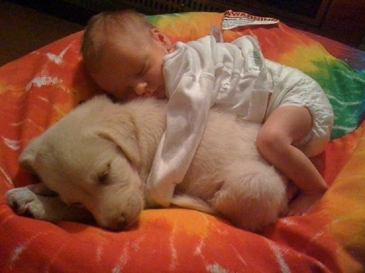 cats_dogs_and_children_36