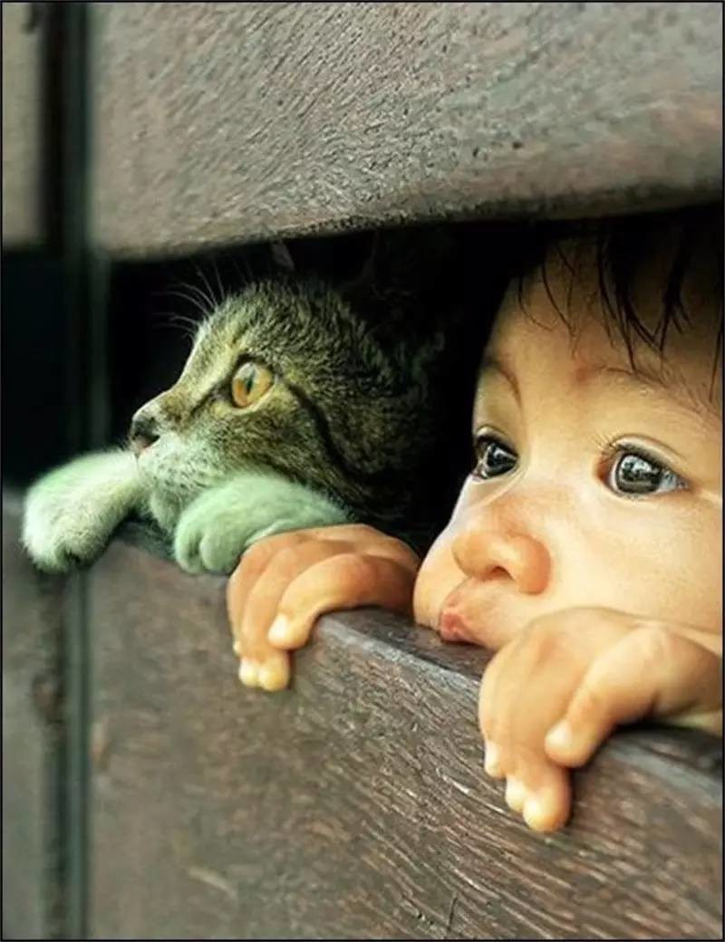 cats_dogs_and_children_37_