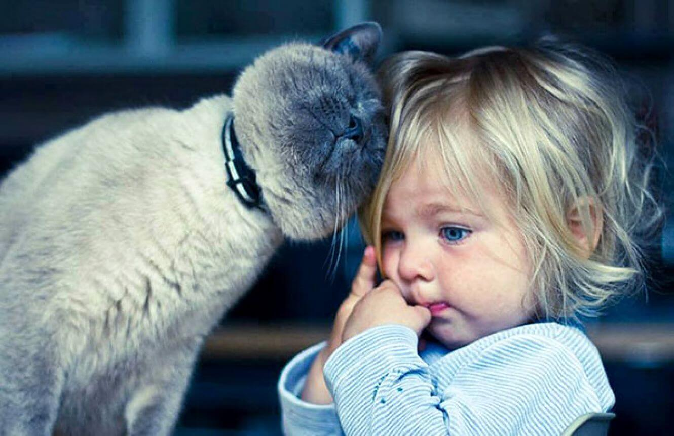 cats_dogs_and_children_38