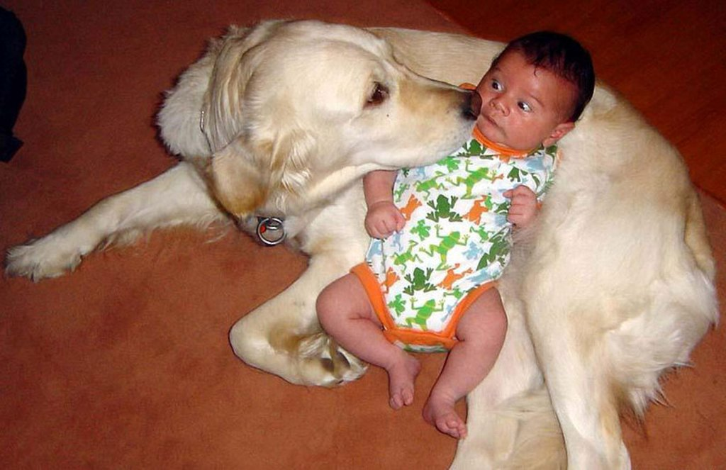 cats_dogs_and_children_39