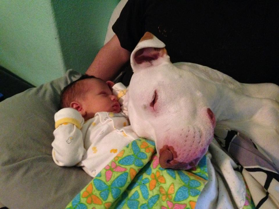 cats_dogs_and_children_40