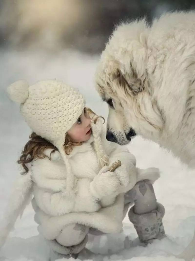 cats_dogs_and_children_42