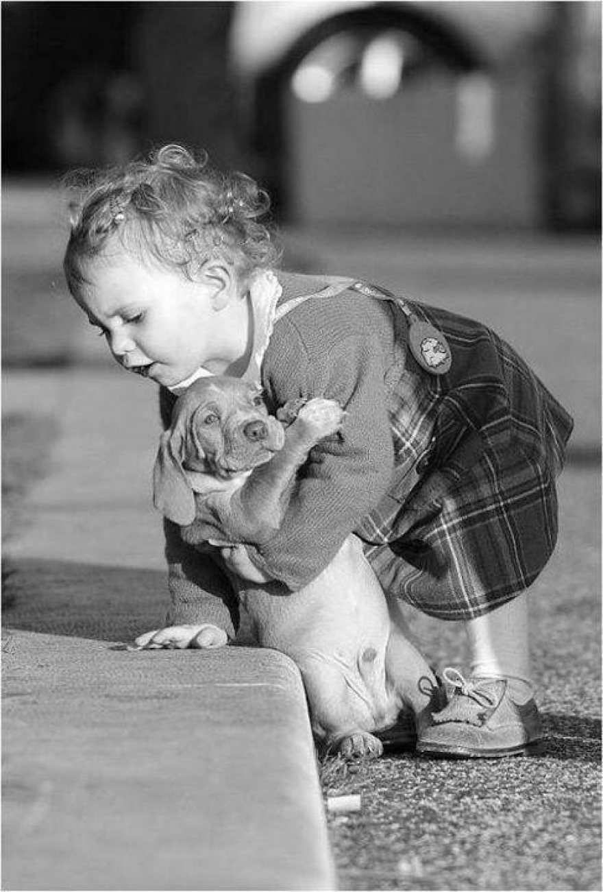 cats_dogs_and_children_43