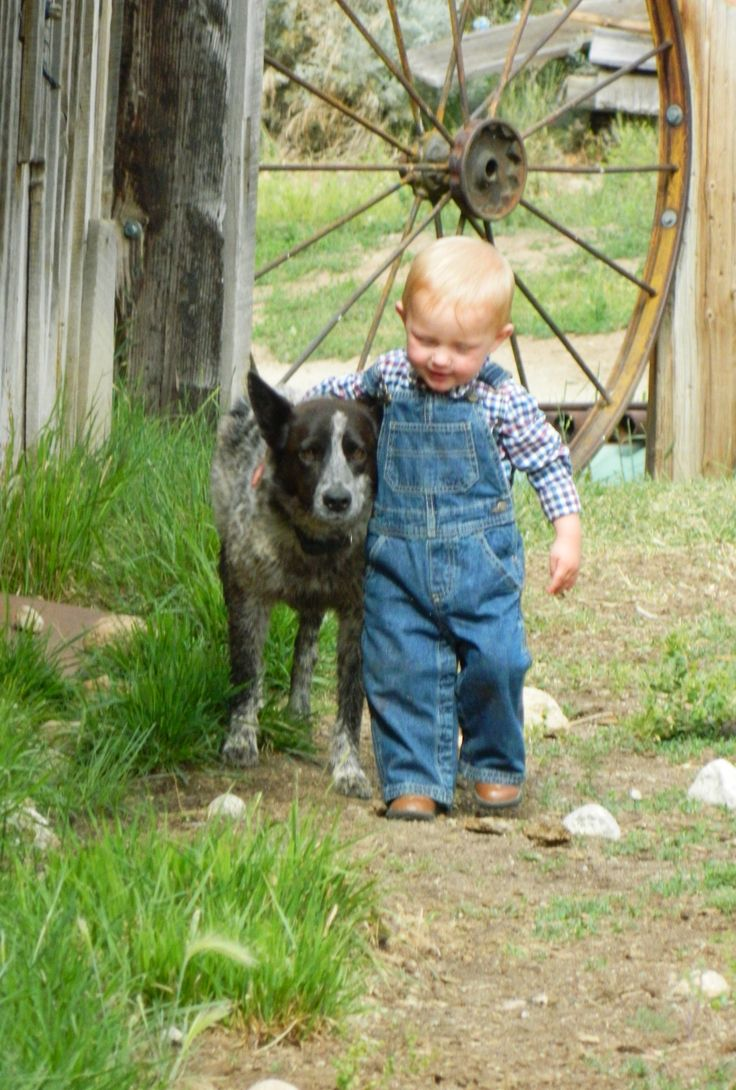 cats_dogs_and_children_44
