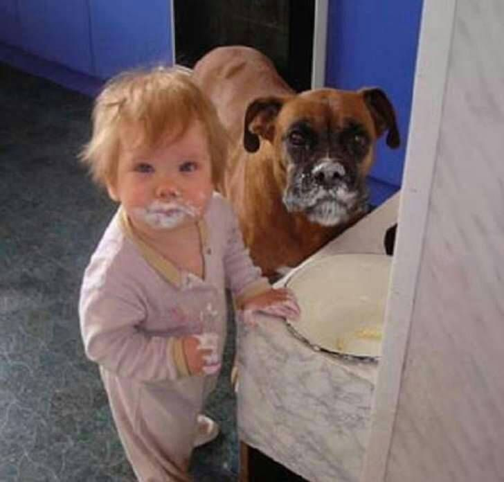 cats_dogs_and_children_8