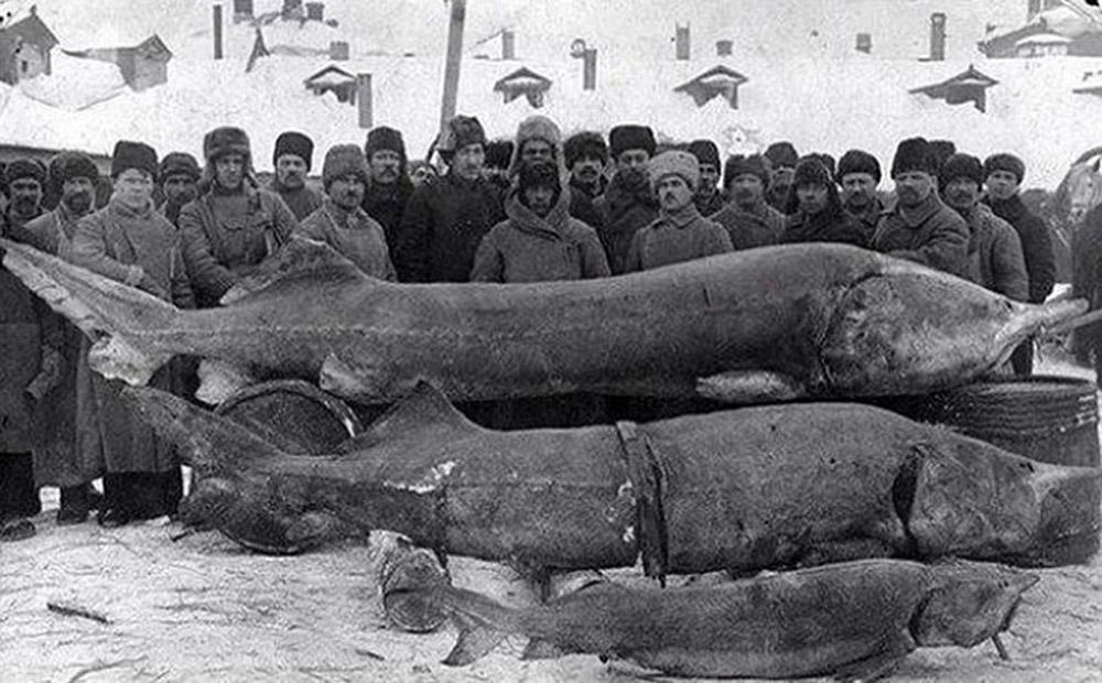 წარმატებული თევზაობა. საბჭოთა კავშირი, 1924 წელი