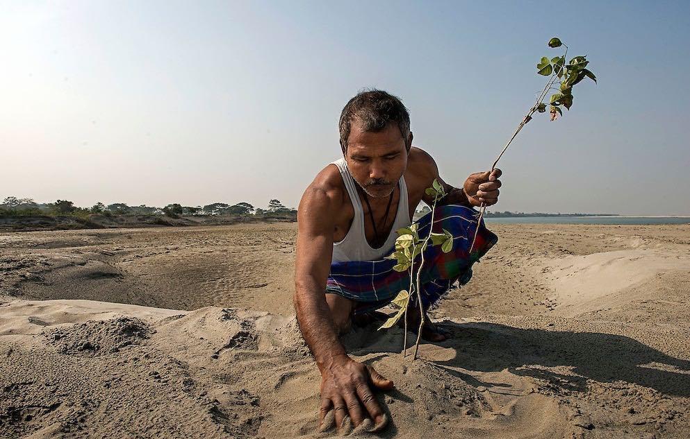 ჯადავ პეიენი 37 წლის განმავლობაში ხეებს რგავდა