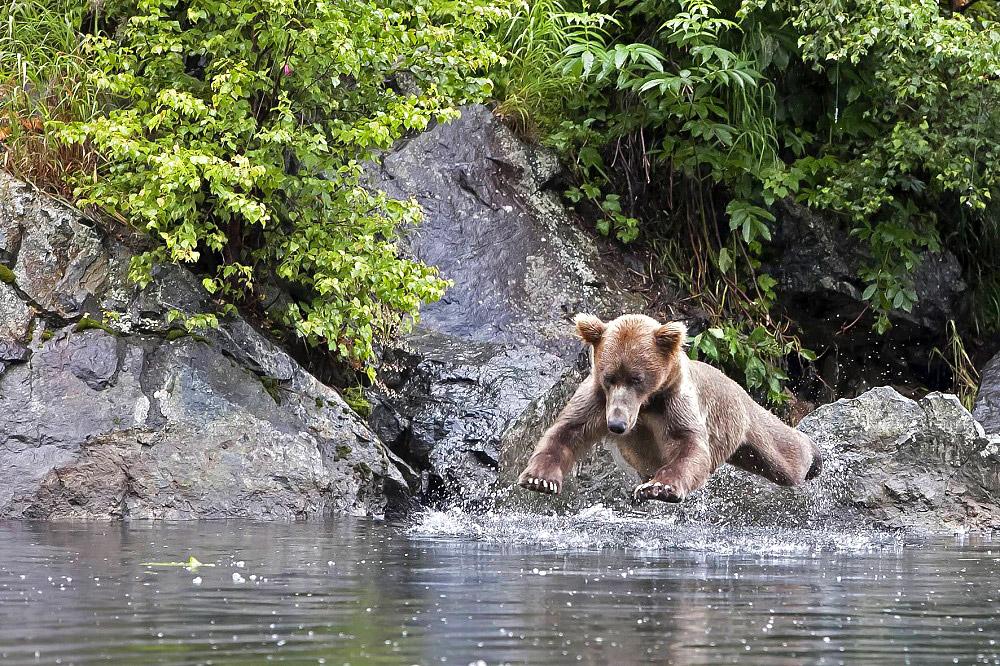 დათვებმა იციან, როგორ გაერთონ