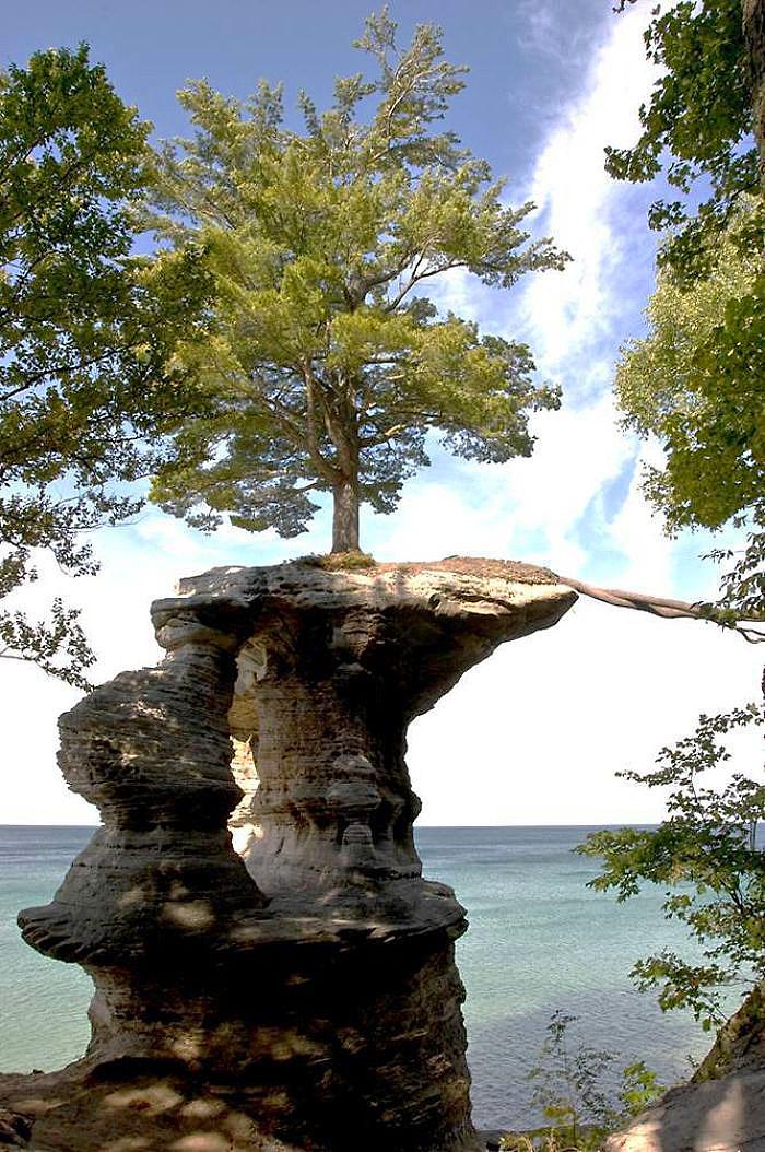 საკვები ნივთიერებების მოსაპოვებლად ამ ხის ფესვებმა მეზობელ კუნძულს მიაკითხეს
