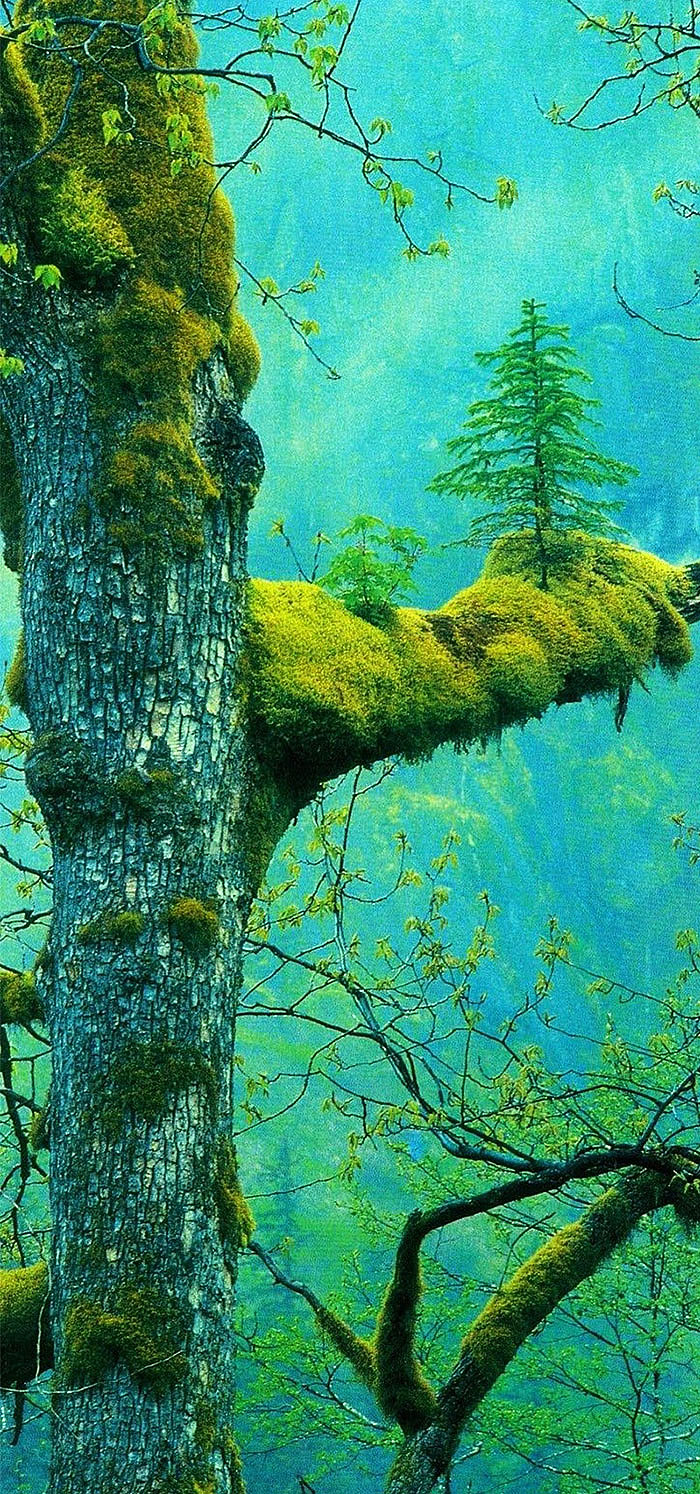 ხე, რომელიც ხეზე იზრდება