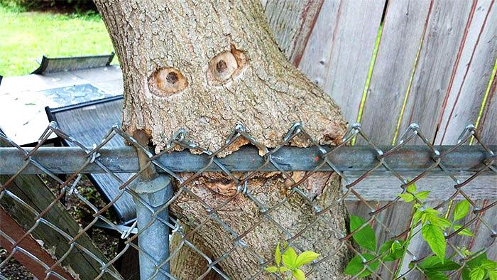 ხემ ღობე შეჭამა