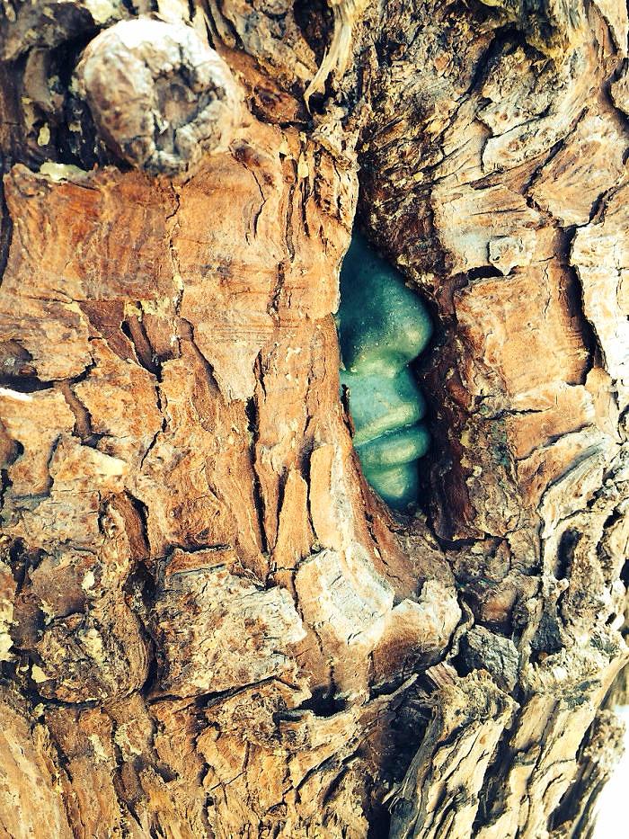 ეს ხე იზრდება ადამიანის სახის სკულპტურის გარშემო. იქმნება შთაბეჭდილება, თითქოს შიგნით მწვანე ადამიანია დატყვევებული