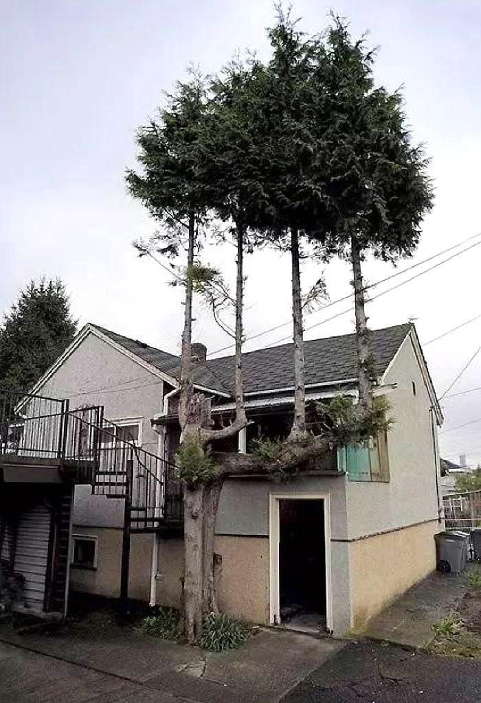 ხეები ხეზე
