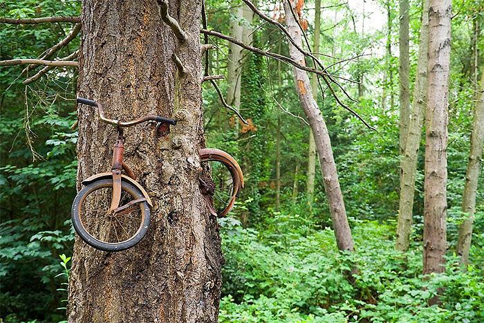 განთქმული ველოსიპედი, რომელიც ტყეში დატოვეს და ხემ შეჭამა, ვაშინგტონი