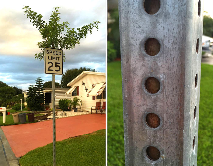 ხე, რომელიც სიჩქარის შემზღუდველი ნიშნის ღერძში გაიზარდა